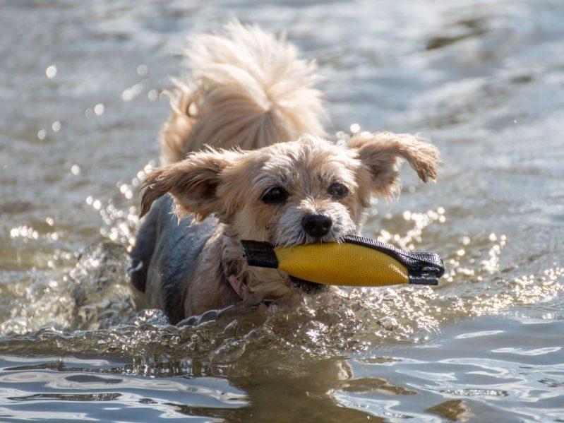 Hundeschwimmen Badepark Bentheim